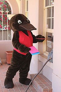 Molong Post Office staff were surprised to see a giant platypus