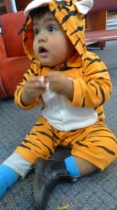 Flynn the Tiger