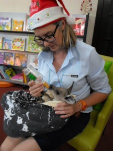 Forbes Library 4th Dec 2015 Storytime 12 Days of Christmas Aussie Style Theme visitor Joey named Declan Foster Mum Kathy1